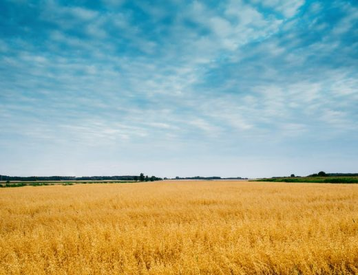 letné pole