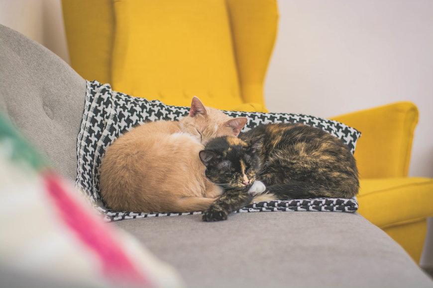 macky spia na gauči